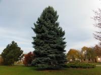 Vánoční strom grafický návrh veřejné osvětlení Hofmeister