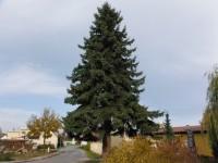 Grafik Blachere vánoční strom